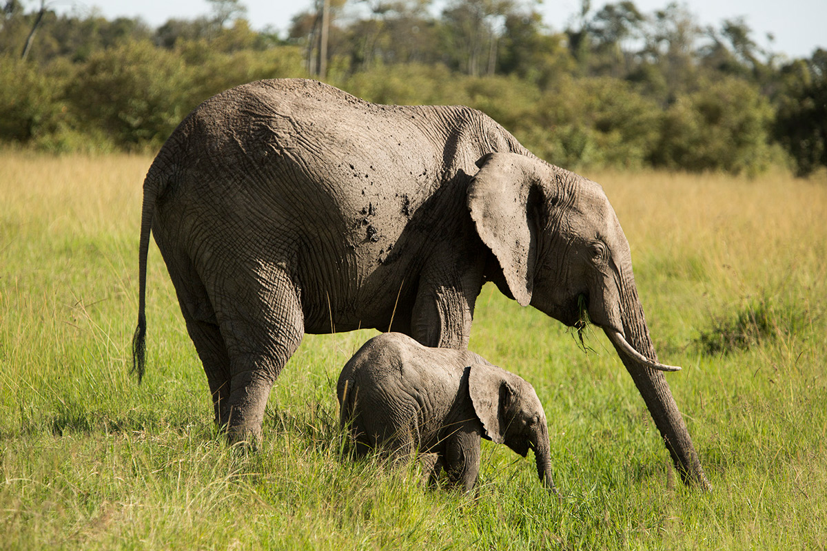 Elephant-and-baby