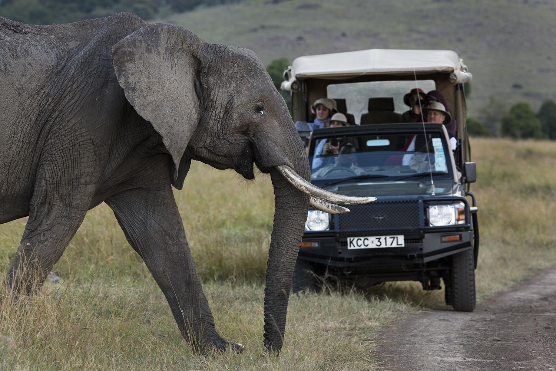 Elephant and safari car in the Mara