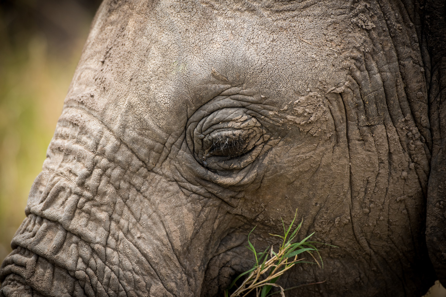 Elephants eye portrait