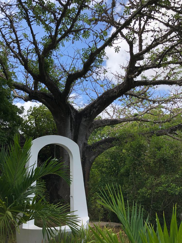 Swahili tree