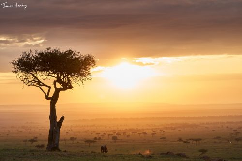 Majestic sunrise in the Maasai Mara