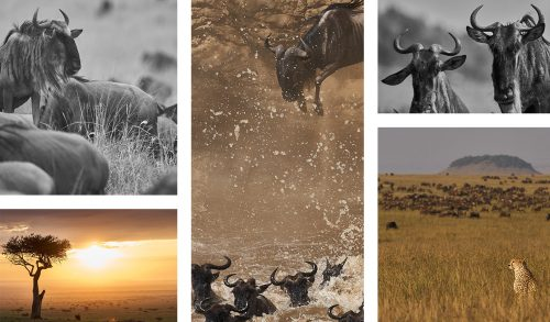 The dust and the drama of the great migration