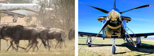 Easy access to iconic wildlife events like the Migration