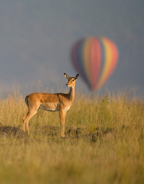 Hot air balloons offer unparalleled game viewing in the Mara