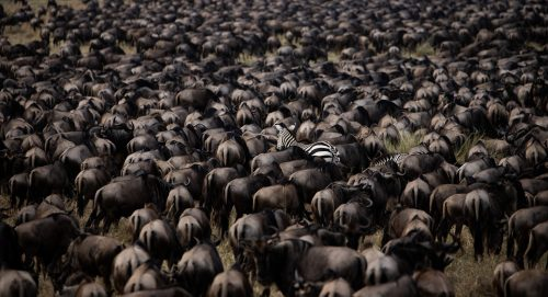 There is always something unusual to photograph in the Maasai Mara