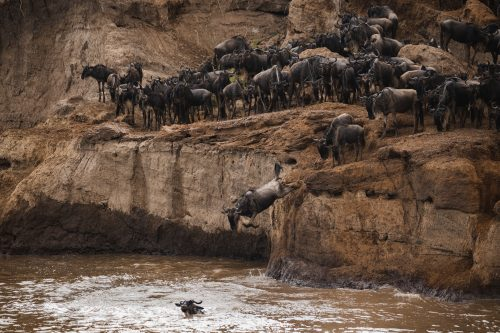 Taking the plunge into the Mara River