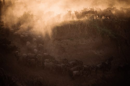 The drama and the dust of a river crossing