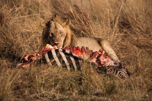 The variety of wildlife sightings in the Mara is inexplicable