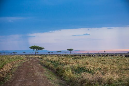 The dramatic, every changing skies of the Maasai Mara