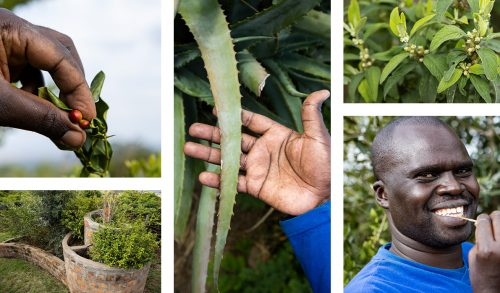 Shamba keeper James Keshei oversees all aspects of the planting and growing of herbs, fruits and vegetables