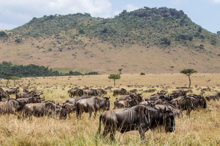 Migration with Angama Mara