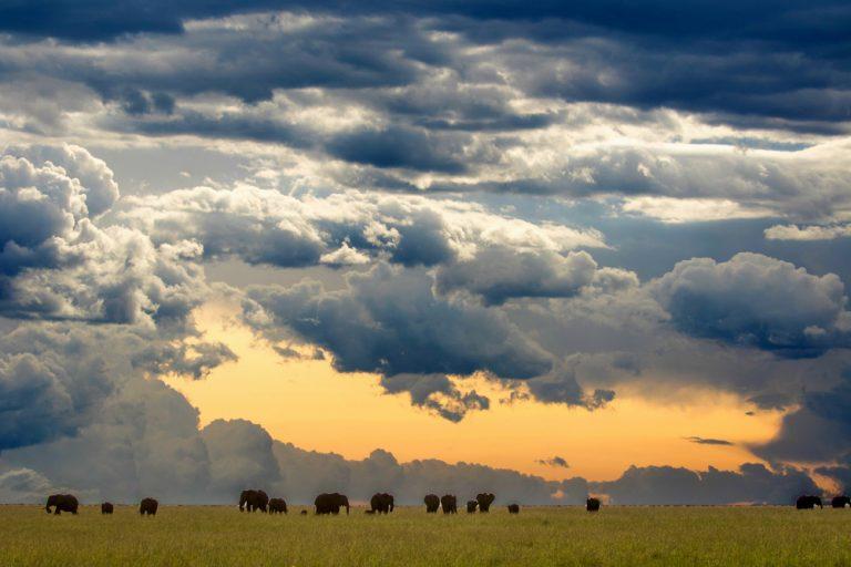 Elephants and big skies in the Maasai Mara