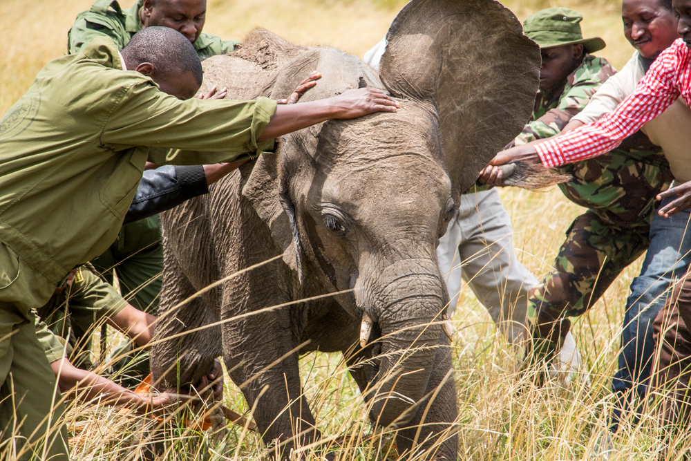 Sedating the elephant