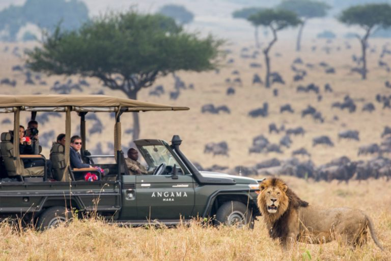 Lion on the hunt during the Great Migration