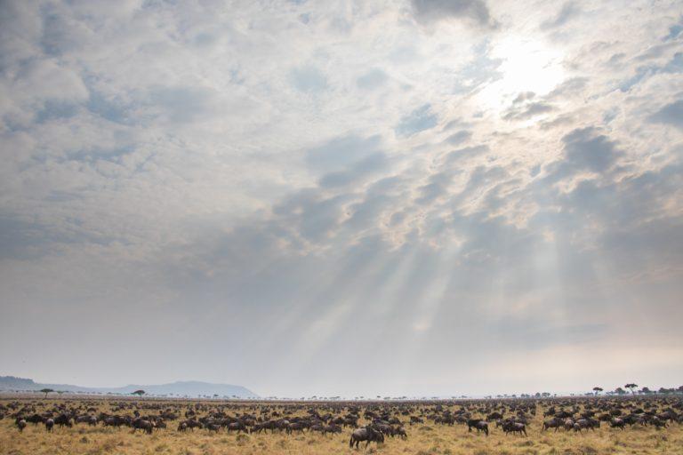 Rays over the migration Maasai Mara