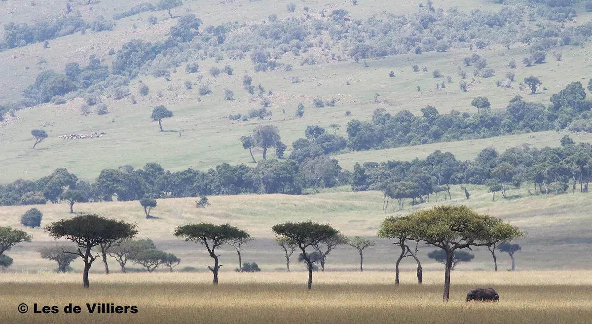 Mara Spotted Plains