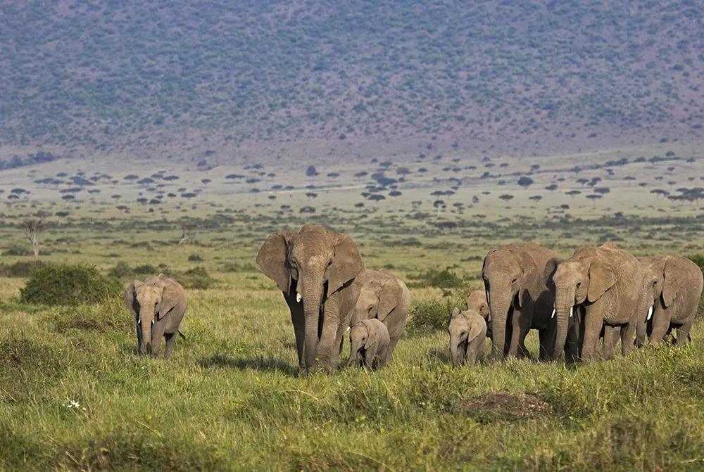 7. Angama Valentines Day Elephant_©StarsofAfrica_webb