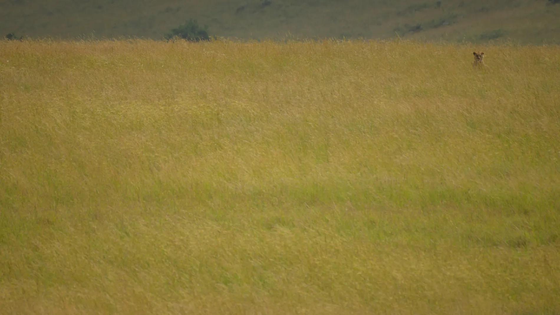 Typical Mara