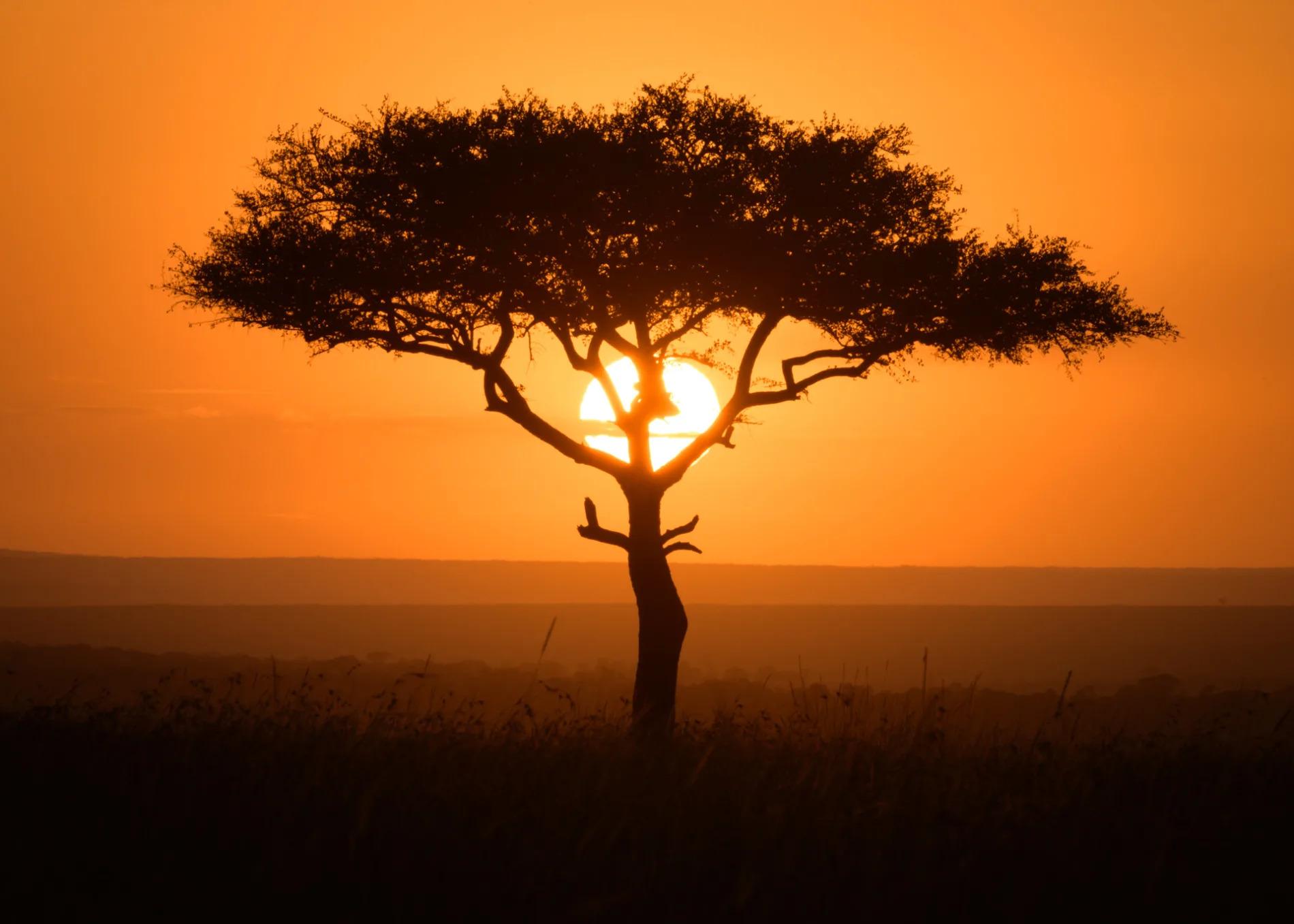 tree and sunrise