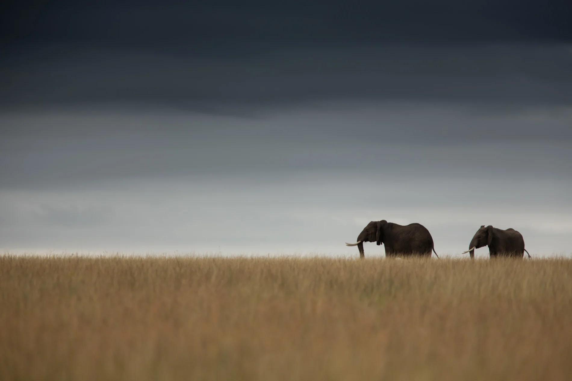 Elephant and horizon