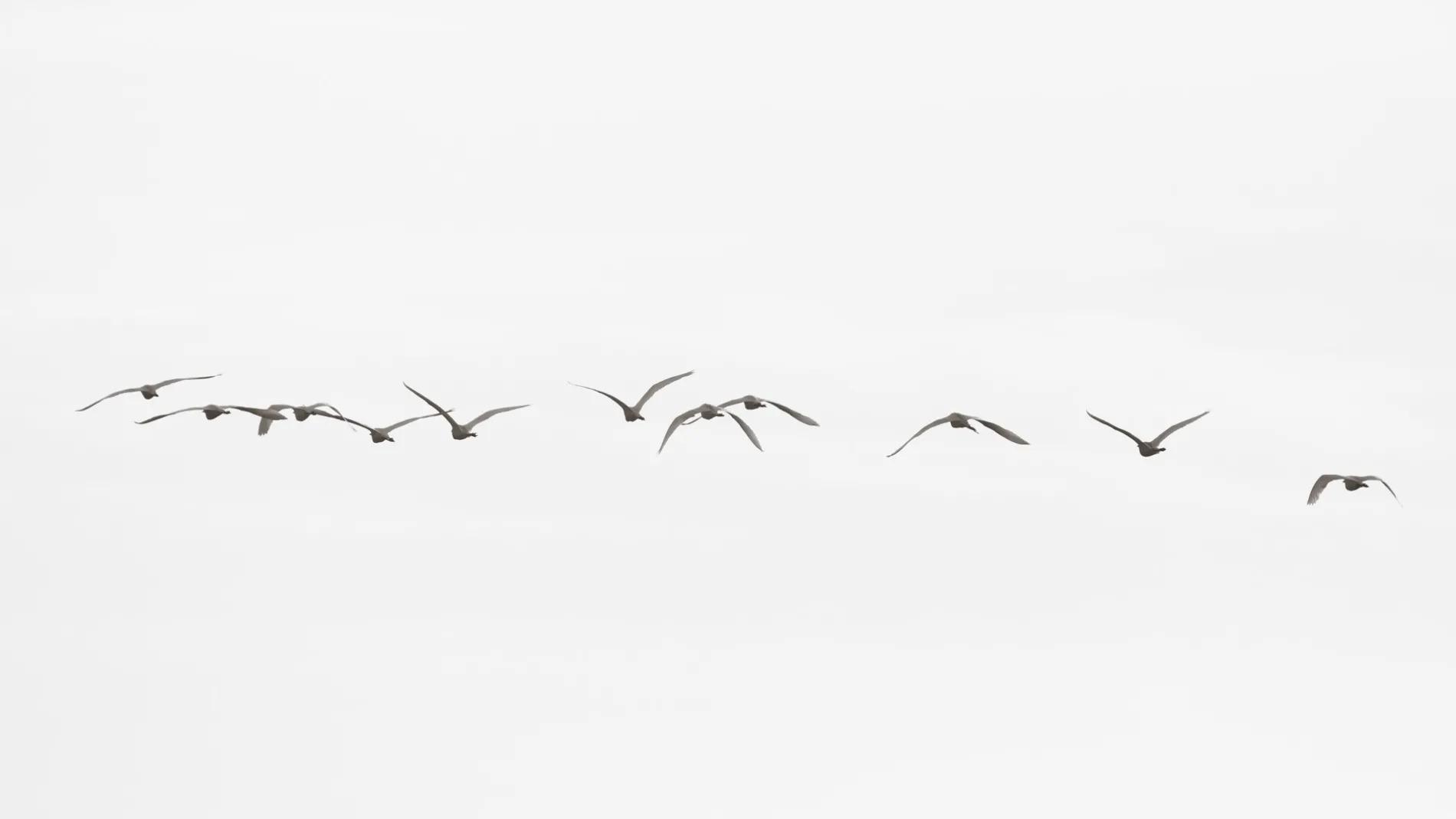 Birds in flight in smoke