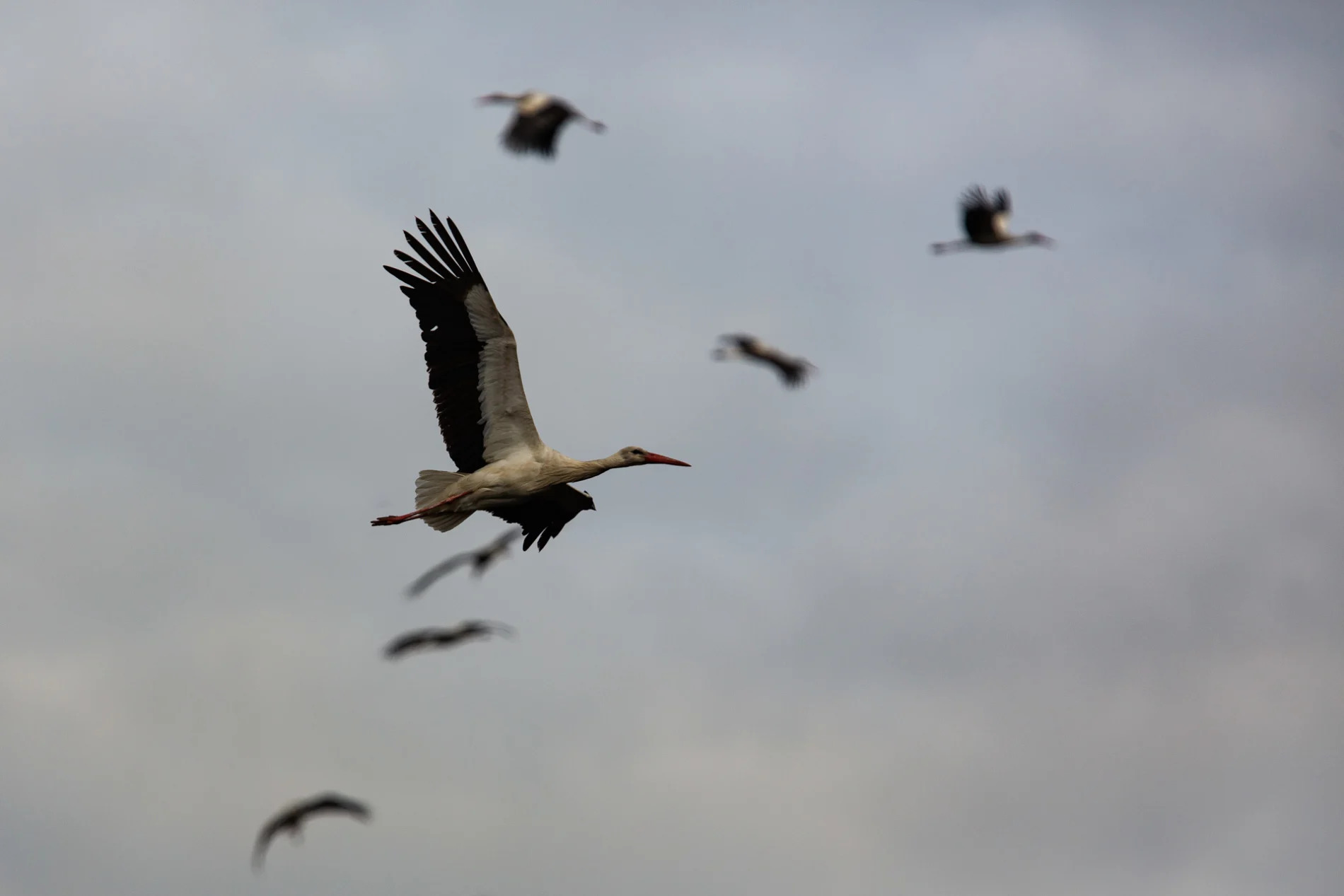 Storks in smoke