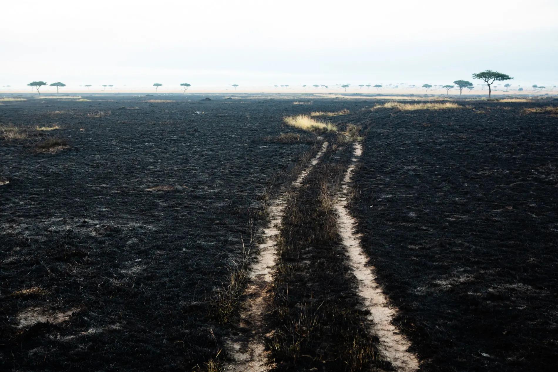 Road in burnt area