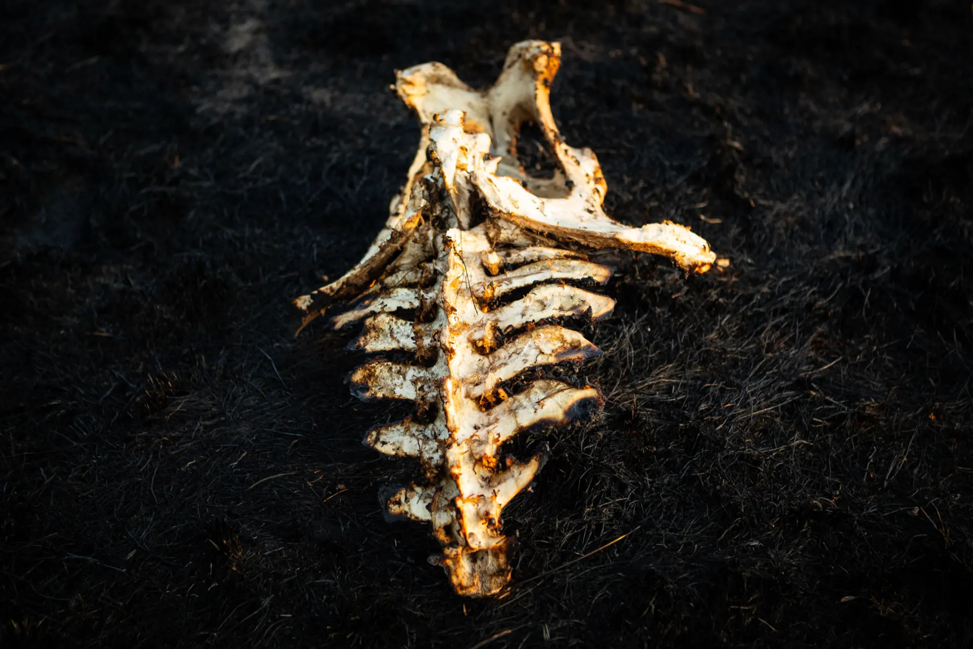 Carcass in fire