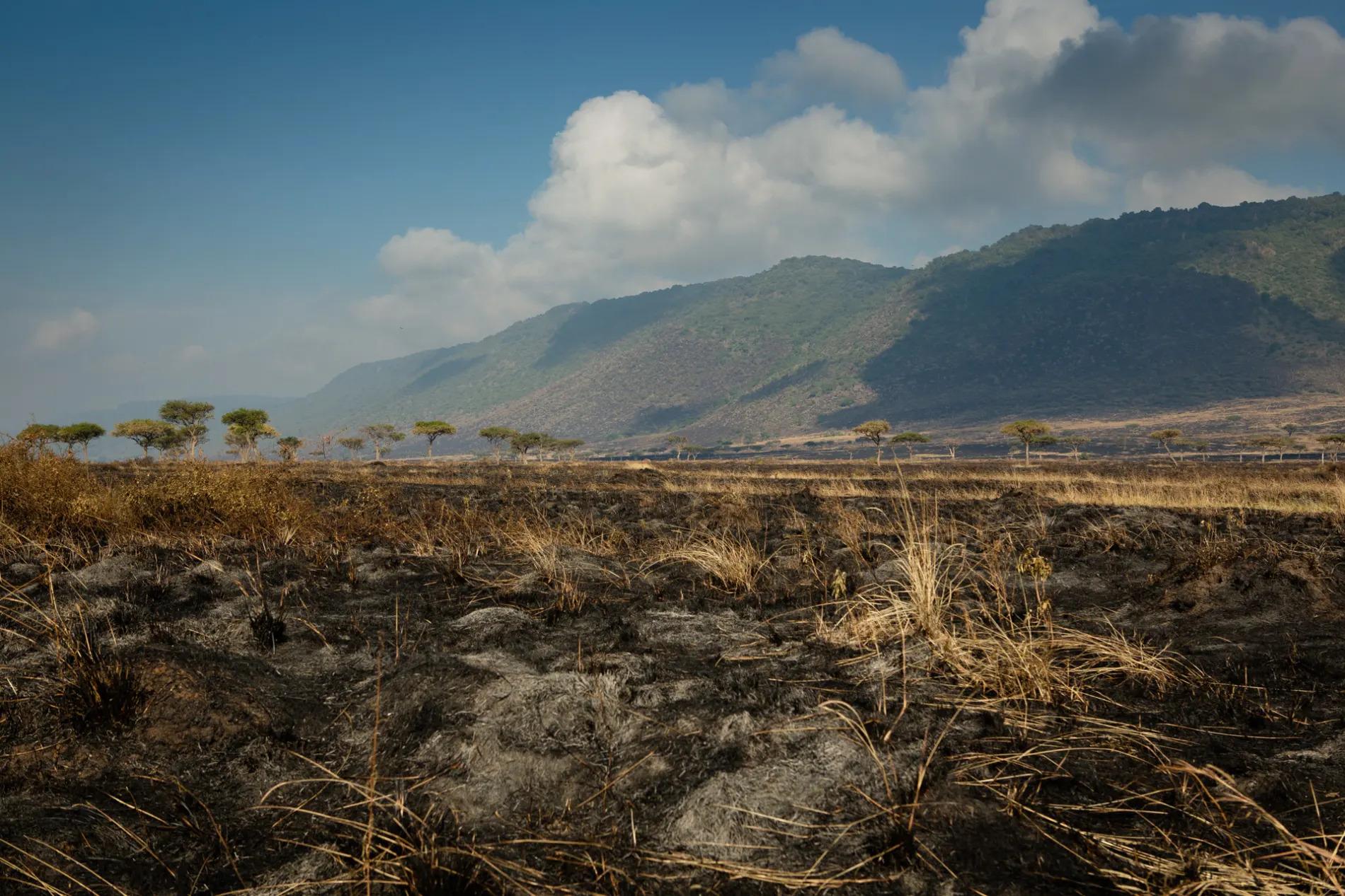 Burnt Grass from Fire