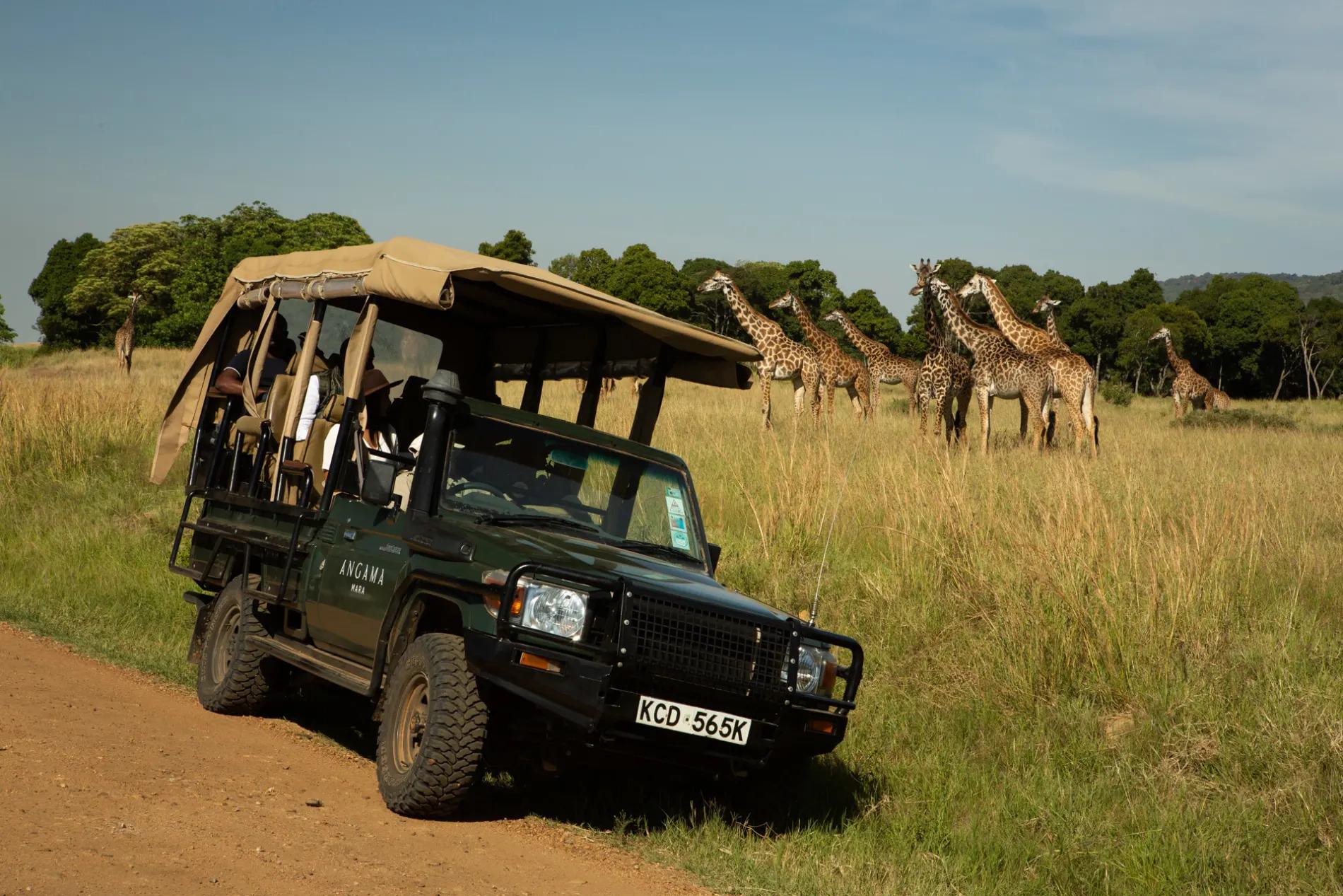 Giraffe and car
