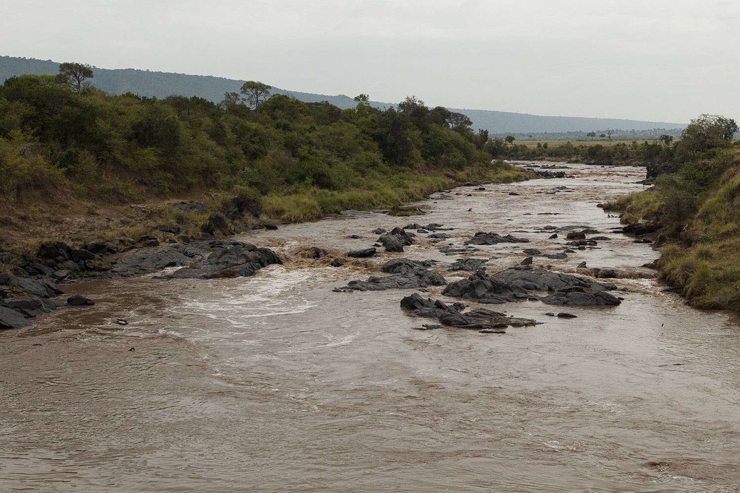 Mara river with water