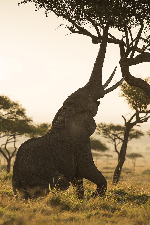 Elephant stretch