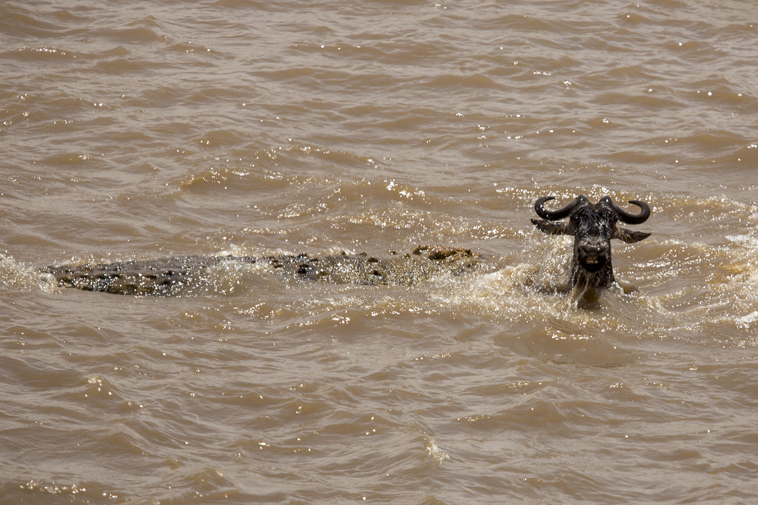 Crossing and croc2