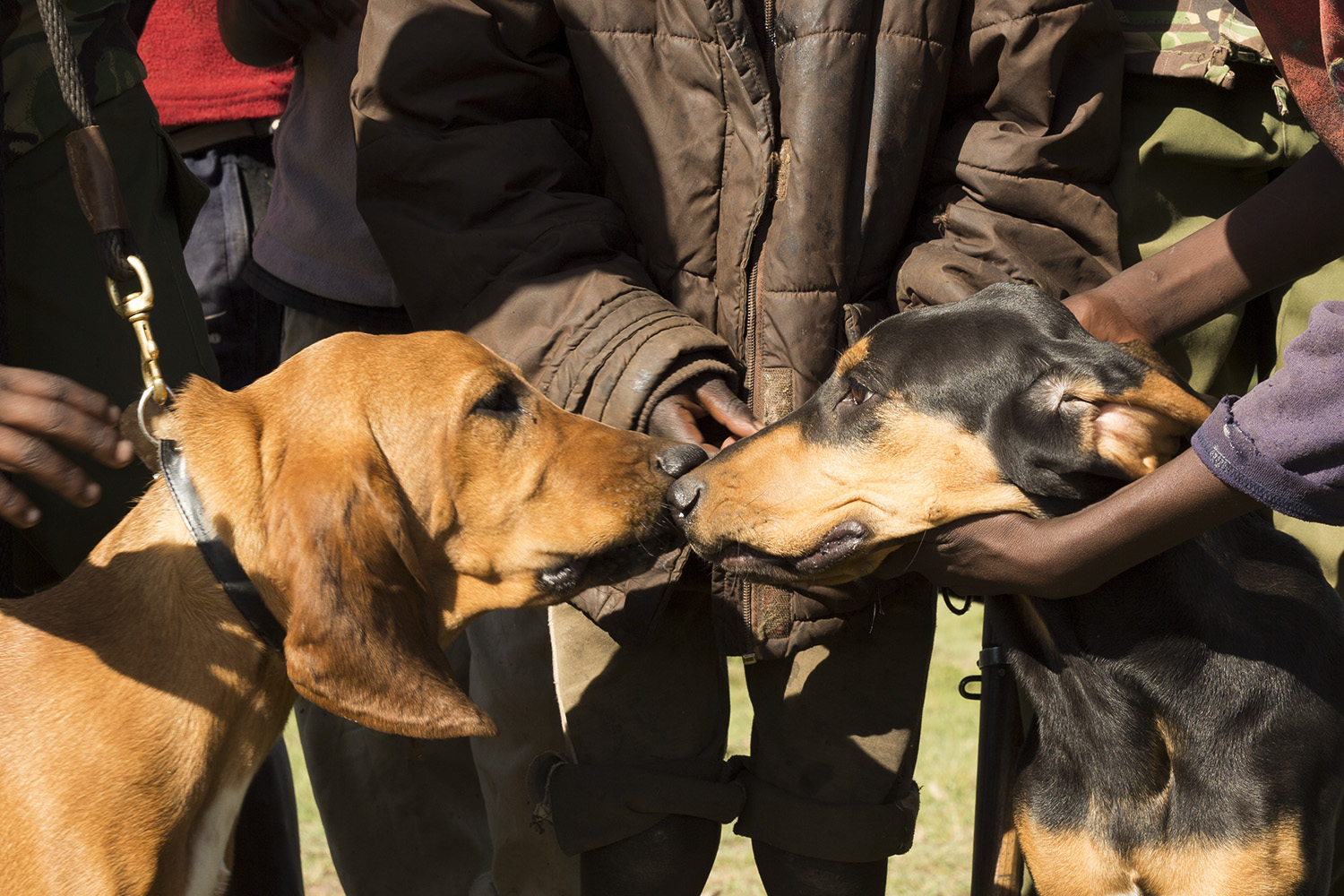 Sniffer dogs and kids hands
