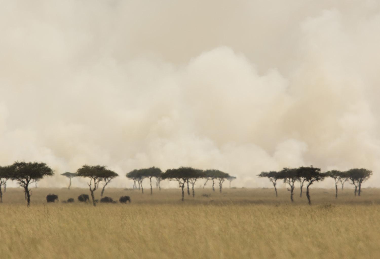 Fire and elephants