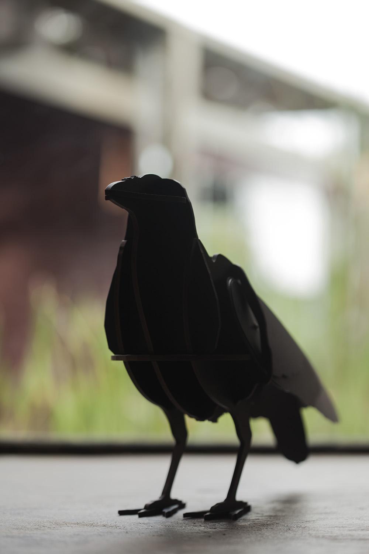 Olkurruk crow