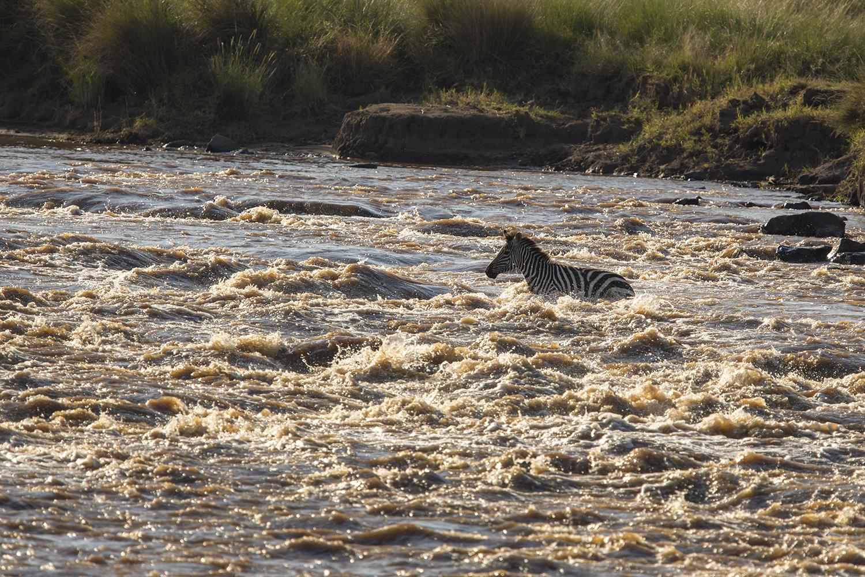 Zebra crossing water
