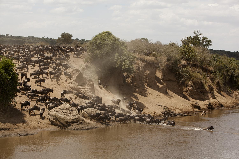 Great Migration Crossing Maasai Mara 1