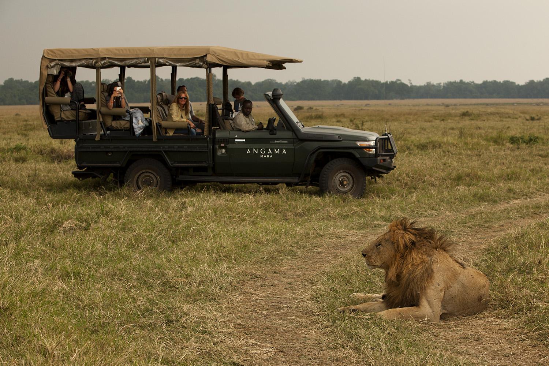 Angama safari car and a lion