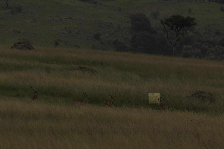 Lion hunt uncovered