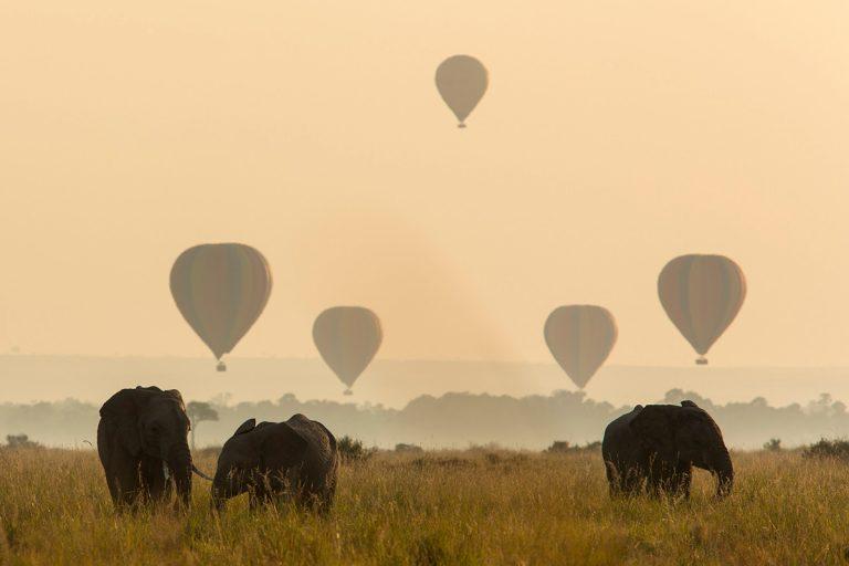 Balloon time with elephants