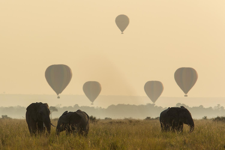 Elephants and balloons