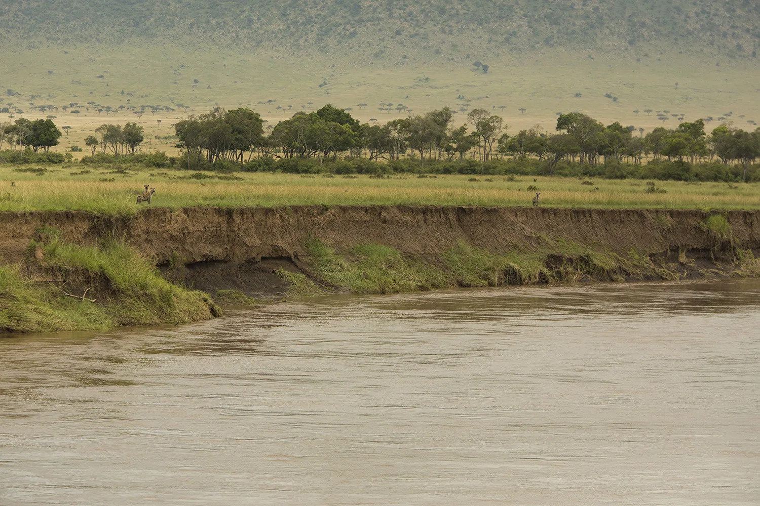 Hyenas and river