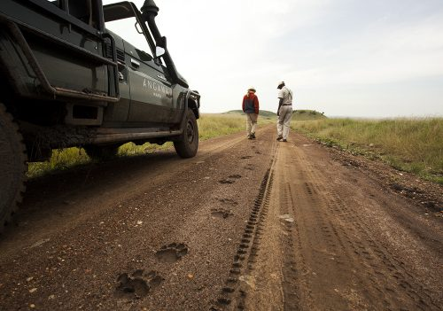 Tracking lions in the Maasai Mara