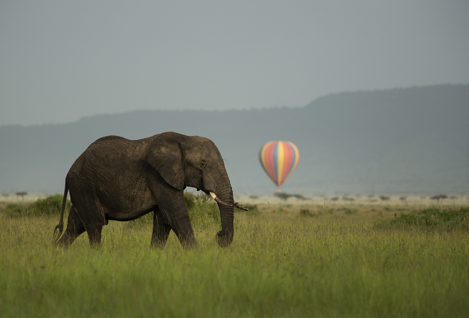 Elephant and balloon