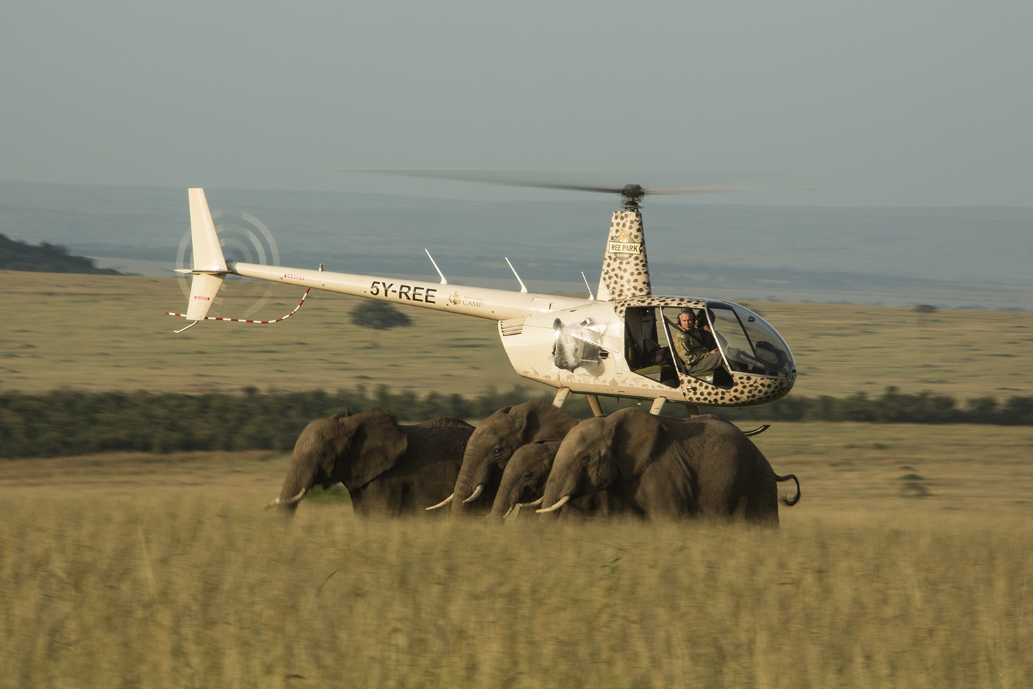 Helicopter side on with elephants