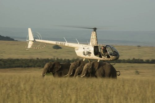The Mara Elephant Project helicopter monitoring the elephants