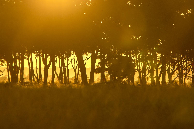 Suunrise and trees