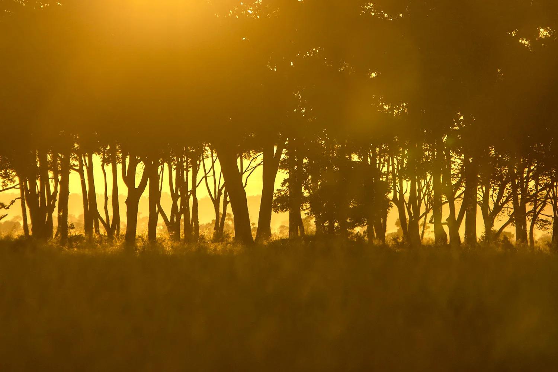 Suunrise-and-trees