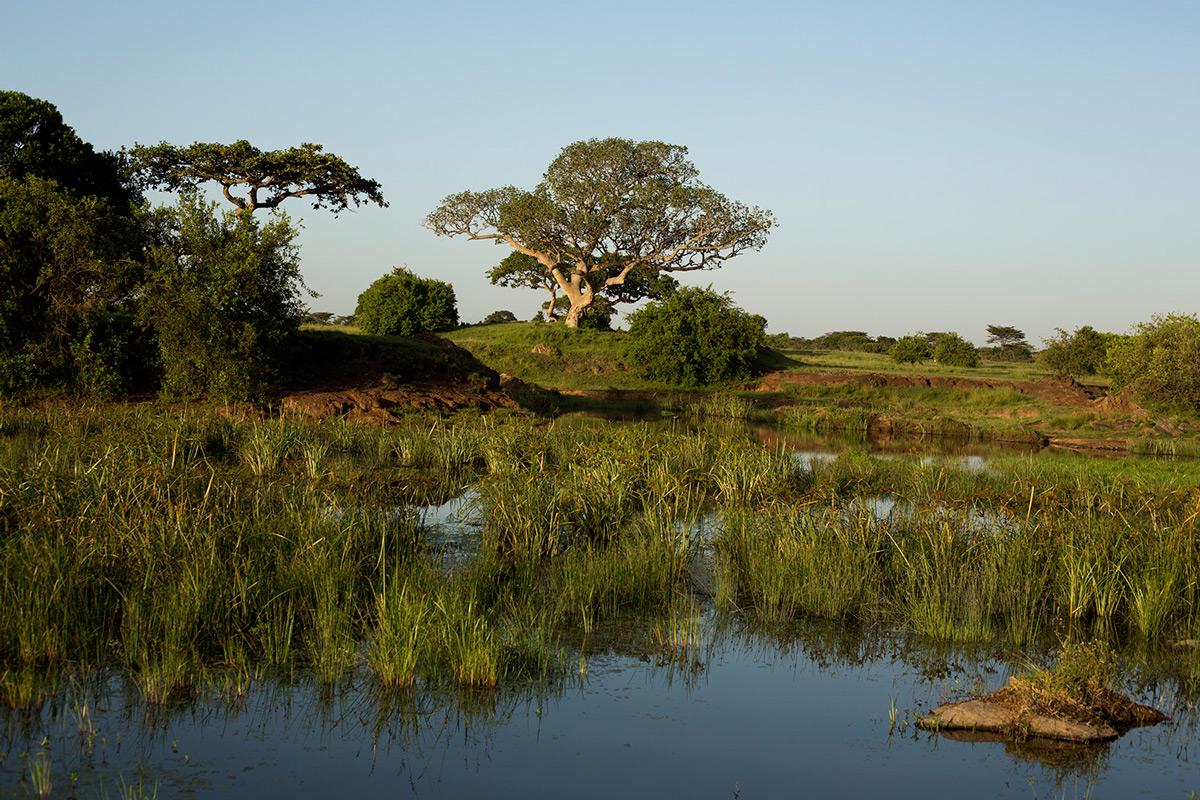 Askari-walk-wetland